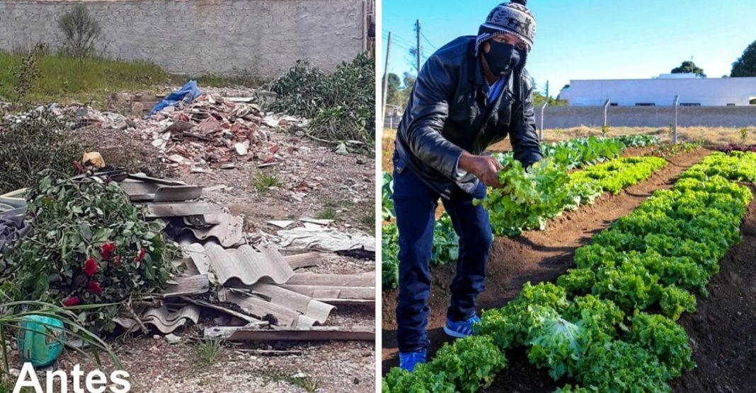 moradores curitiba transformam terreno baldio horta comunitária
