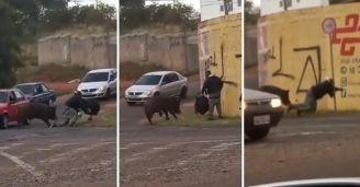 vaquinha motoboy atacado porco meta batida