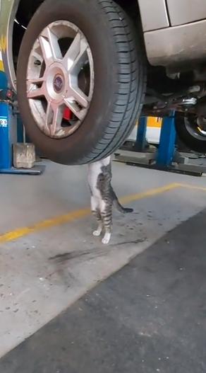 gatinho mecânico adotado oficina sp