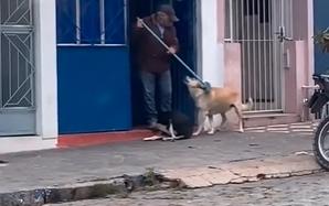 cachorros pedem para idoso coçar suas costas