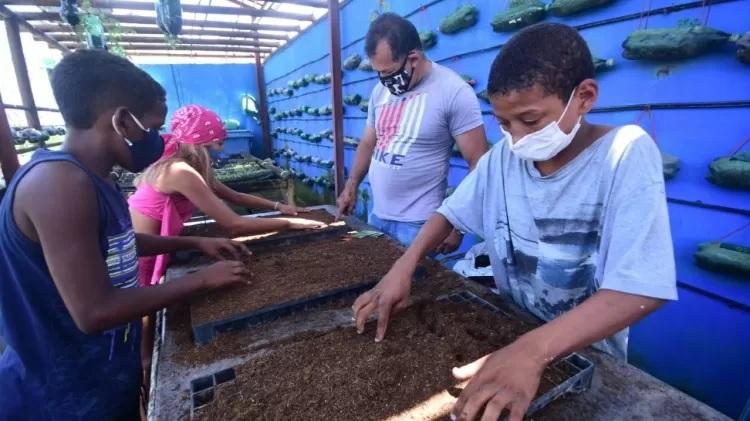 telhado casarão recife vira horta que alimenta famílias carentes