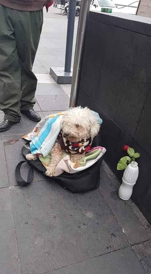 idoso sai para vender doces na rua todos os dias com cãozinho