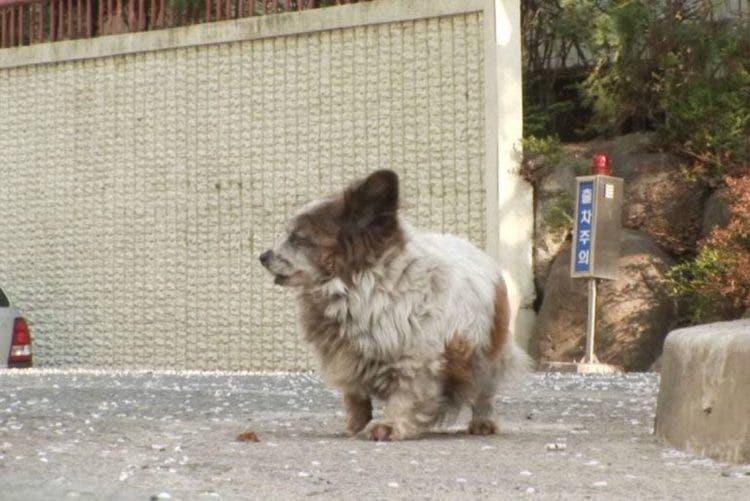 cadela idosa espera dez anos retorno tutores