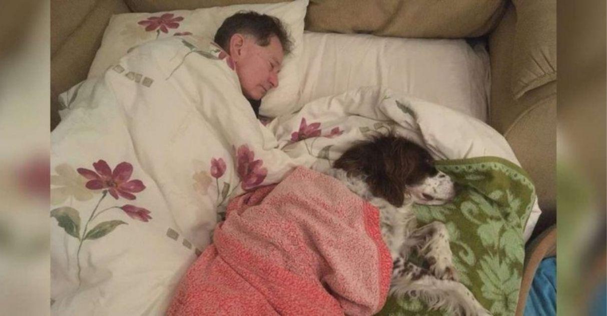 tutor dorme com cachorro idoso para lhe fazer companhia