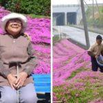 Idoso passa mais de uma década criando jardim de rosas para alegrar sua esposa cega: 'Ela adora o cheiro'