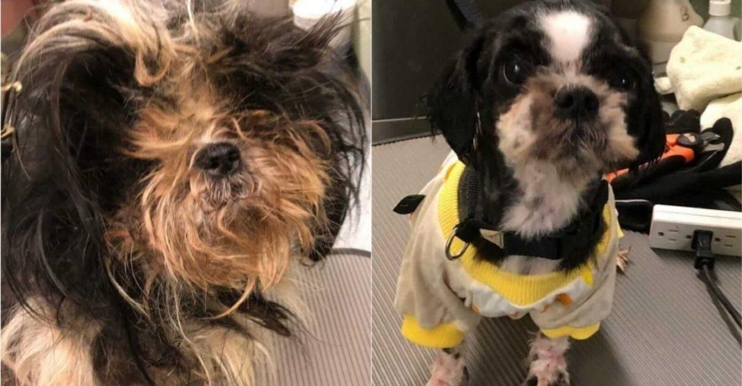 homem dá banho e tosa gratuita cães de abrigo