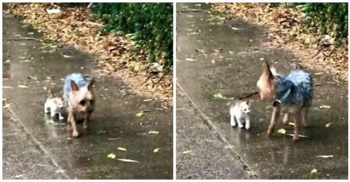 cadela acolhe gatinho de rua que encontrou na rua