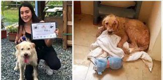 cachorro que sofreu queimaduras resgatado e adotado