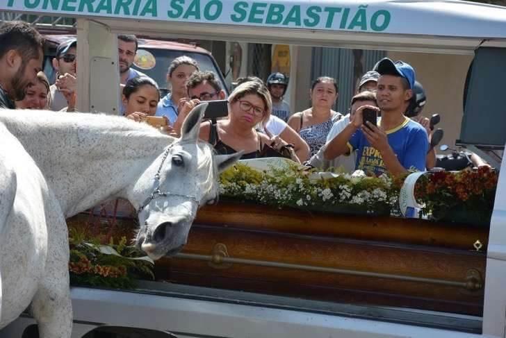 cavalo se despede do amigo em funeral