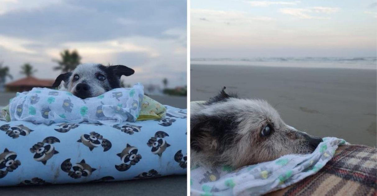 cãozinho idoso aproveita dia de praia