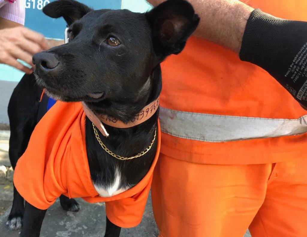 cachorro adotado por gari acompanha tutor limpeza ruas rio