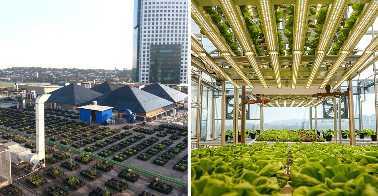 fazenda urbana de campinas