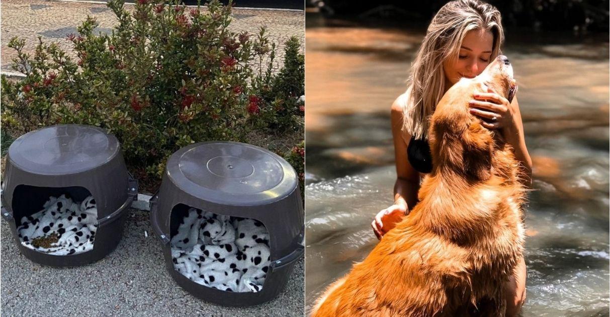 jovem transforma baldes em casinhas para animais de rua