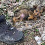 Filhote de rua que vivia dentro de sapato para se proteger do frio é adotado e ganha vida nova