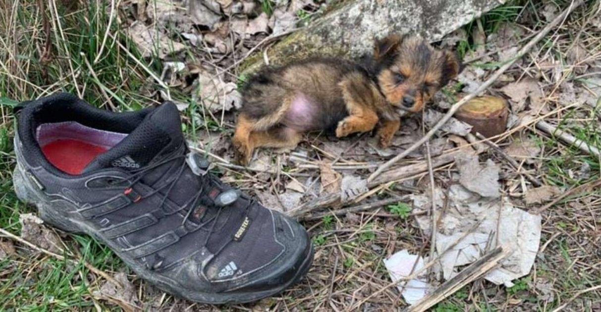 filhote de rua vivia dentro de sapato adotada vida nova