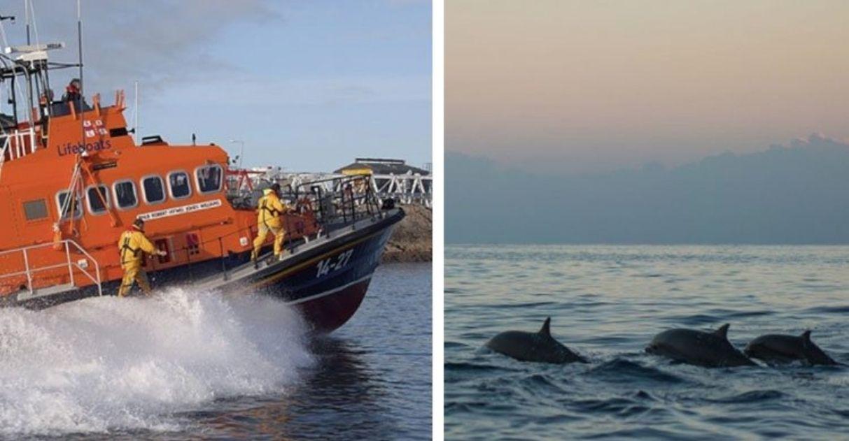 golfinhos conduzem equipe de resgate até banhista perdido no mar
