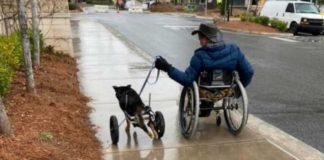 cachorro com paralisia é adotado por homem mesma condição