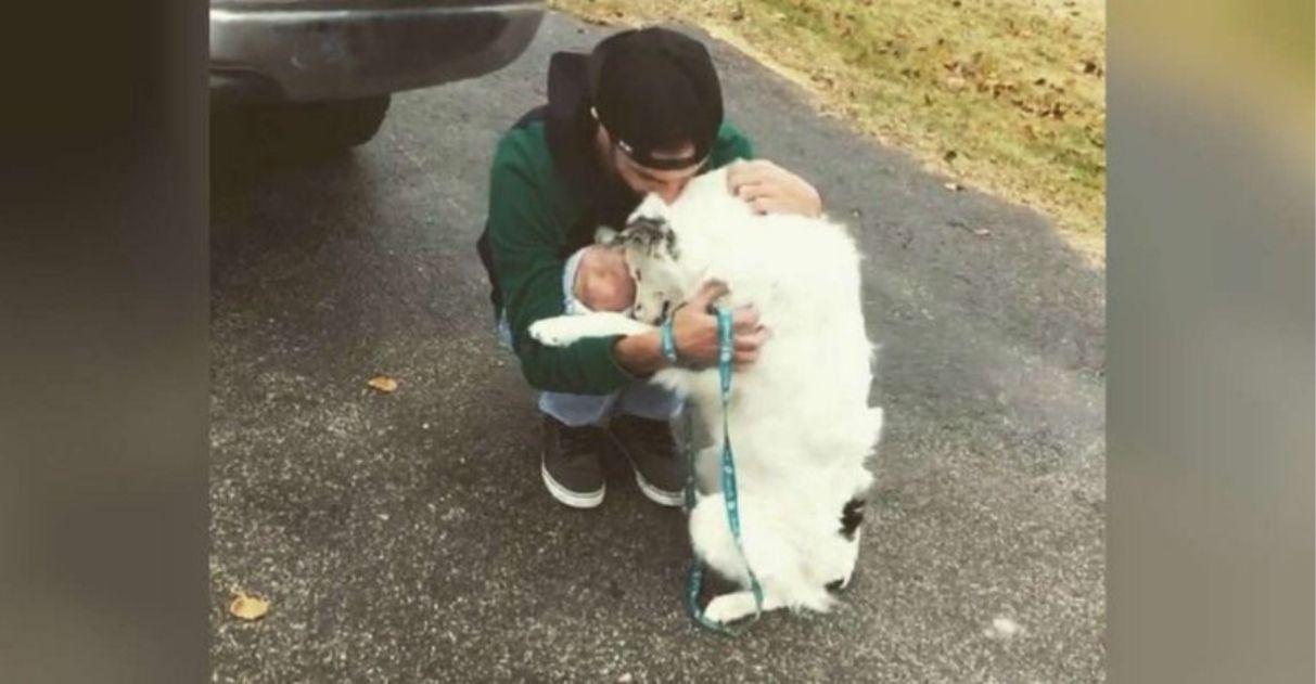 cachorro negligenciado é adotado e tem vida nova