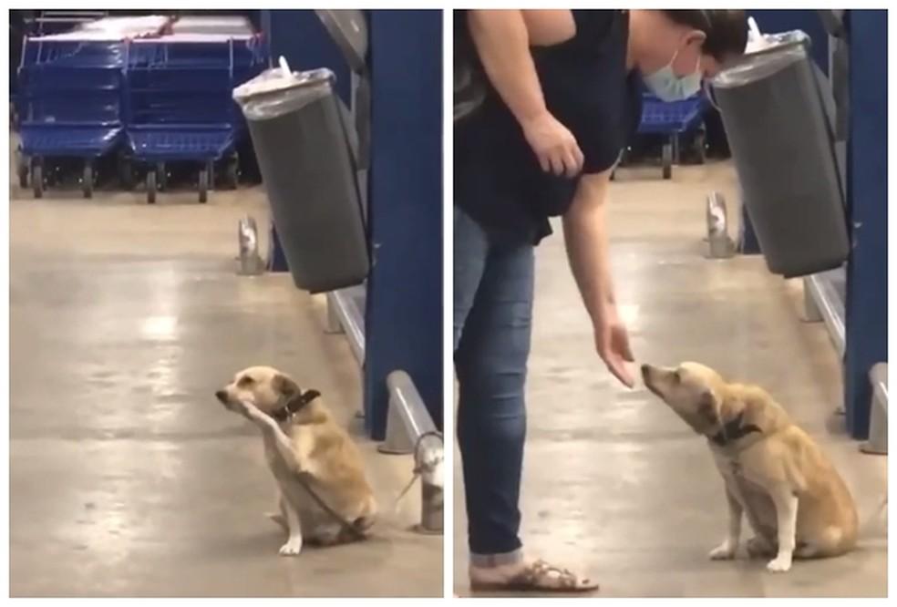 cadelinha acenava e pedia carinho em supermercado vídeo