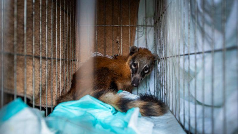 animais afetados pela seca no pantanal matam sede com caminhões-pipa