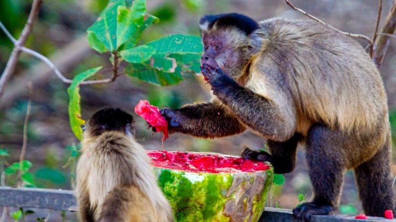 sos pantanal animais tem mendigado para conseguir comida sobreviver