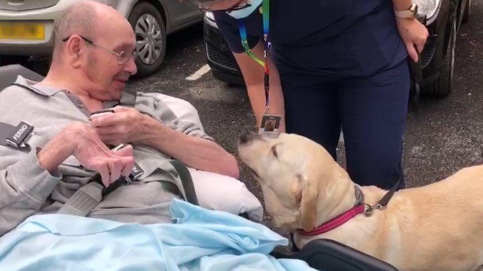 cachorrinha reencontra tutor em casa de repouso