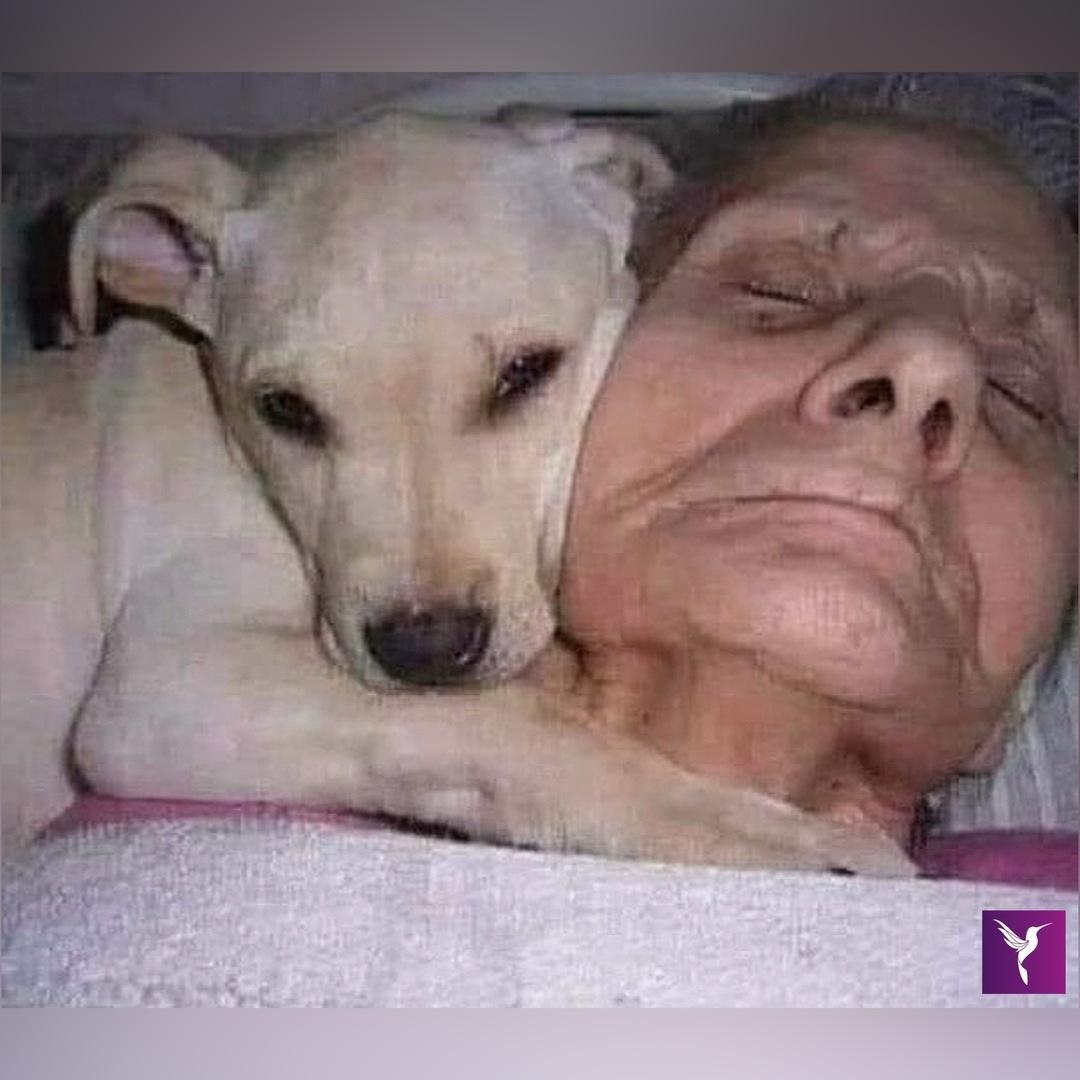 idosa hospitalizada acorda do coma graças a cachorro