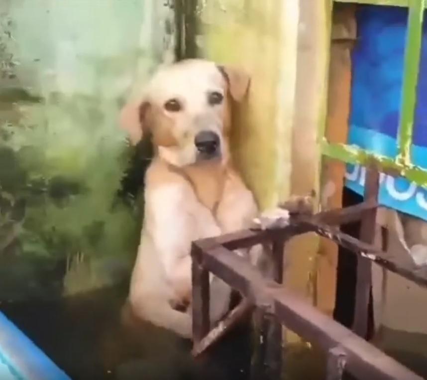 cachorro resgatado enchente