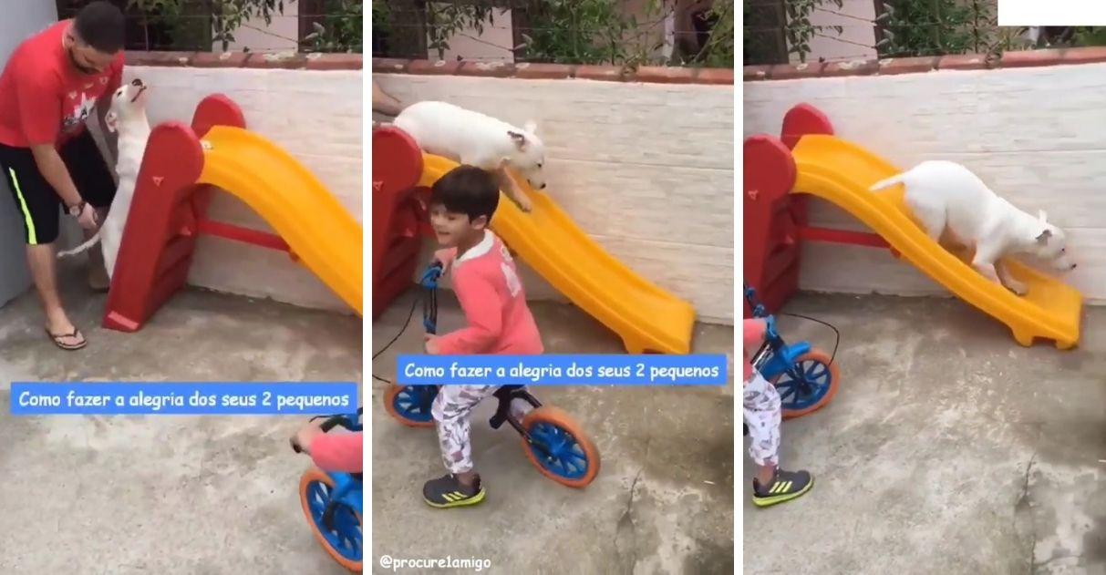 com tutor cãozinho se diverte escorregador infantil video