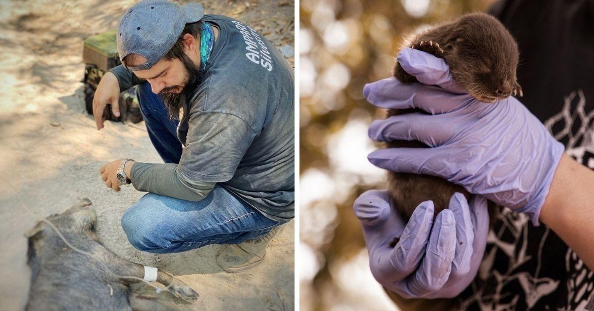 vaquinha voaa sos pantanal ajuda salvar animais contra seca e fome