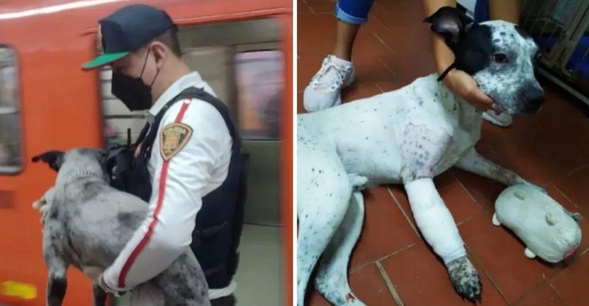 voluntários resgatam cachorro abandonado caiu trilhos metrô