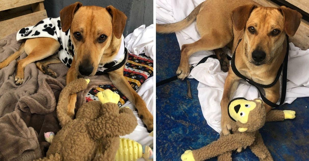 cão busca abrigo hotel é acolhido funcionários