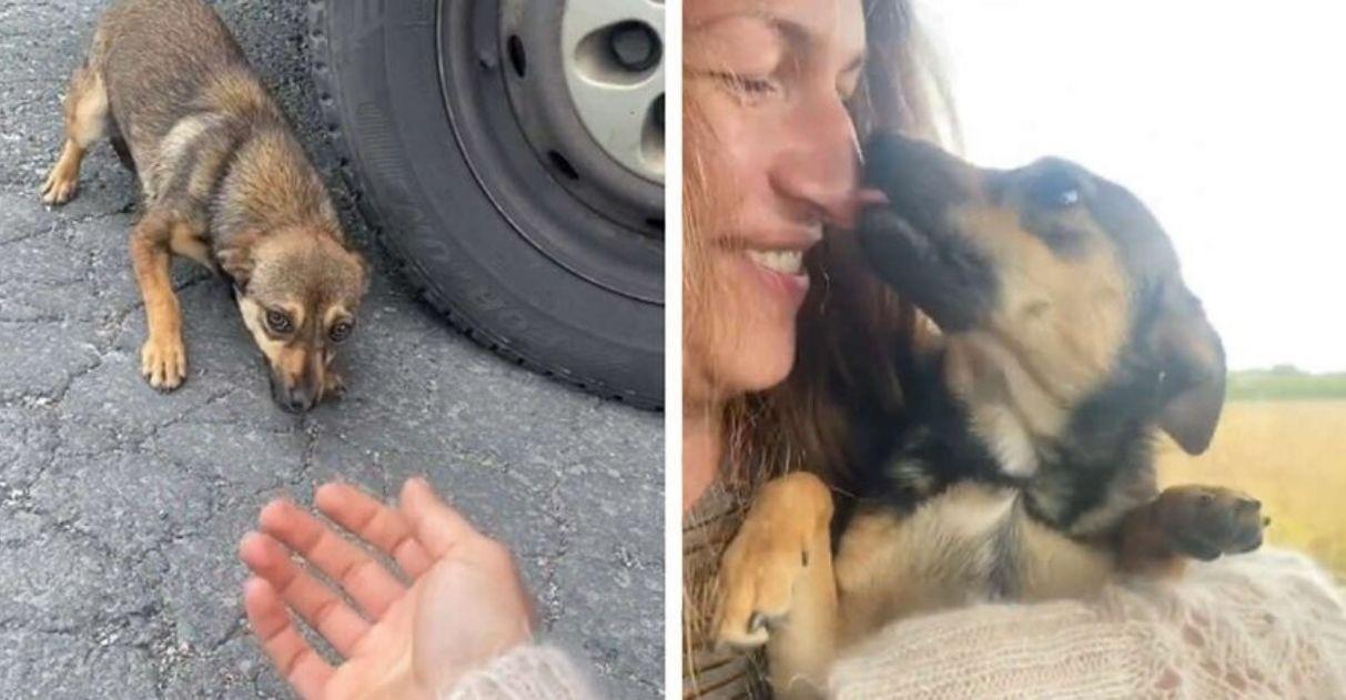 mulher acolhe cãozinho abandonado estrada
