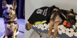 policiais homenagem cadela faleceu corporação