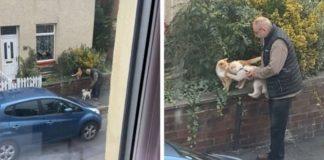 mulher flagra idoso ajudando cãozinho fazer amizade gato vídeo